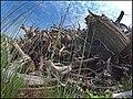 Empilement de souches de pins après désouchage d'une coupe rase 2018 Landes de Gascogne 16.jpg