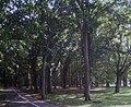 Eniwa Park 20110827 01.jpeg