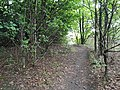 Epping Forest 20170727 111545 (49374832341).jpg