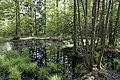 Erlenbruch Langwiesenholz 04.jpg