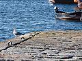 Esperando la pesca (14292970631).jpg
