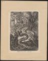 Eunectes murinus - 1700-1880 - Print - Iconographia Zoologica - Special Collections University of Amsterdam - UBA01 IZ11900049.tif