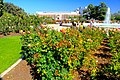 Exposition Park Rose Garden, Exposition Blvd. at Vermont Ave. University Park 12.jpg