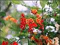 FLOWERS 4 (7169982683).jpg