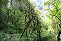 FR64 Gorges de Kakouetta52.JPG