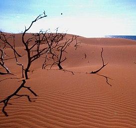 Parque Nacional Los Médanos De Coro Wikipedia La Enciclopedia Libre