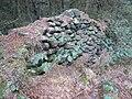 Farley Moor - Woodland Boundary - geograph.org.uk - 333830.jpg