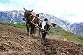 Farming at Lalazar.jpg