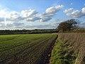 Farmland, Arborfield - geograph.org.uk - 1253440.jpg