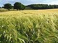 Farmland, Bledlow - geograph.org.uk - 892892.jpg