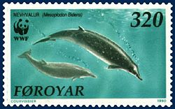 Faroe stamp 197 Mesoplodon bidens.jpg