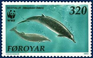 Mesoplodont whale - Sowerby's beaked whale (on Faroese stamp)