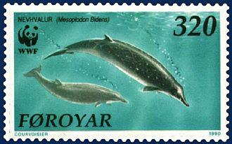Sowerby's beaked whale - Sowerby's beaked whale on Faroese stamp