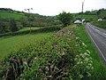 Felingwm Uchaf - geograph.org.uk - 1307947.jpg