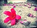Feni, Bijoy Shingh Dighi - panoramio.jpg