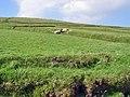 Field System, Great Blasket - geograph.org.uk - 923763.jpg