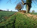 Field edge path - geograph.org.uk - 1603939.jpg