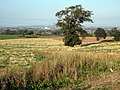 Fields at Huntstile - geograph.org.uk - 1508537.jpg