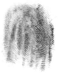 The fingerprint created by that friction ridge structure.