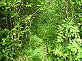 Finnish jungle (07-2004) - panoramio.jpg