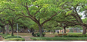 Southampton, Houston - Fleming Park