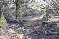 Flinders Ranges SA 5434, Australia - panoramio (111).jpg