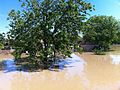 Floods in Croatia Gunja 5.jpg