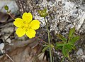 Flora 32 (31742253038).jpg
