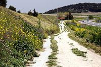 Flora de Valdemoro en la Cañada Real Galiana.jpg