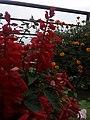 Flower20180527 184752.jpg