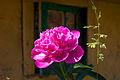 Flower 4197.jpg