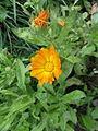 Flower 56 (6847537368).jpg
