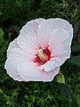 Flower at NYBG.jpg
