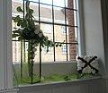 Flower display within St Ann's, Portsmouth Dockyard - geograph.org.uk - 899942.jpg