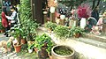 Flower tubs in Pingjiang Road, Gusu, Suzhou, Jiangsu, China, 215000.jpg