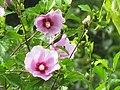 Flower with family.jpg