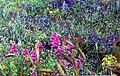 Flowers-Sicily img028.jpg