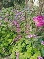 Flowers in spring.jpg