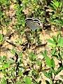 Flutter Butterfly Waldorf MD.jpg
