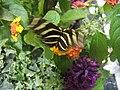 Fluttering Butterfly (175672520).jpg