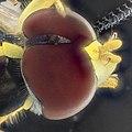 Fly in quartz in alcohol 3x detail (9736472207).jpg