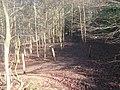 Footpath and Bridleway junction in Sproud's Wood (3) - geograph.org.uk - 1733741.jpg
