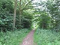Footpath at Tarman's Copse - geograph.org.uk - 1351084.jpg