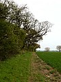 Footpath north of Inkberrow - geograph.org.uk - 1275175.jpg