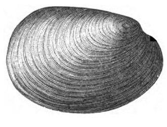 1881 in paleontology - Fordilla troyensis
