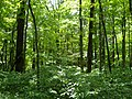 Forest by the Campsite 2 - panoramio.jpg