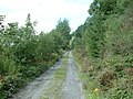Forestry road - geograph.org.uk - 649605.jpg