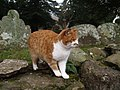 Friendly farm cat that follows you round the church - geograph.org.uk - 1158875.jpg