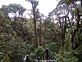 From high up at Mossy Forest, Cameron Highlands.jpg