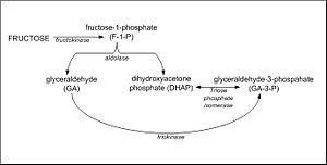 Fructolysis - Figure 1: The metabolic conversion of fructose to DHAP, glyceraldehyde and glyceraldehyde-3-Phosphate in the liver